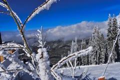 Χιονώδης κλίση με όλα αυτά που περιβάλλουν το Στοκ Εικόνα