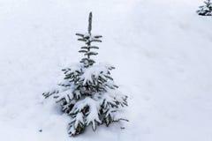 Χιονώδης λίγο δέντρο έλατου στοκ φωτογραφίες