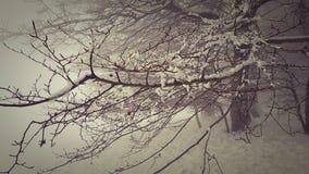 Χιονώδης λεωφόρος κάτω από την ομίχλη Στοκ φωτογραφία με δικαίωμα ελεύθερης χρήσης