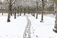 Χιονώδης πορεία σε διάφορα δέντρα σε ένα δάσος Στοκ Φωτογραφία