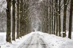 Χιονώδης πορεία σε διάφορα δέντρα σε ένα δάσος Στοκ φωτογραφίες με δικαίωμα ελεύθερης χρήσης