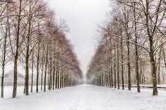 Χιονώδης πορεία σε διάφορα δέντρα σε ένα δάσος Στοκ φωτογραφία με δικαίωμα ελεύθερης χρήσης