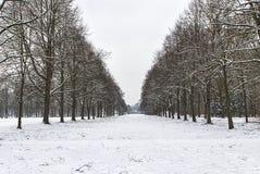Χιονώδης πορεία σε διάφορα δέντρα σε ένα δάσος Στοκ Εικόνες