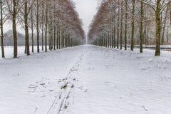 Χιονώδης πορεία σε διάφορα δέντρα σε ένα δάσος Στοκ εικόνες με δικαίωμα ελεύθερης χρήσης
