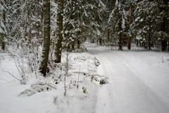 Χιονώδης πορεία στο δάσος Στοκ Φωτογραφίες