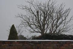 Χιονώδης τοίχος με τα δέντρα στο υπόβαθρο στοκ φωτογραφία