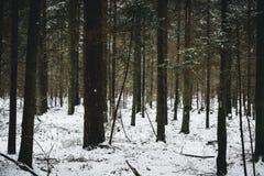 Χιονώδης χειμερινή άποψη στο δάσος Στοκ Εικόνα
