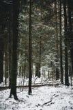 Χιονώδης χειμερινή άποψη στο δάσος Στοκ Φωτογραφία