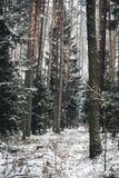 Χιονώδης χειμερινή άποψη στο δάσος Στοκ φωτογραφία με δικαίωμα ελεύθερης χρήσης