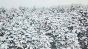 Χιονώδης χειμερινός δασικός εναέριος πυροβολισμός φιλμ μικρού μήκους