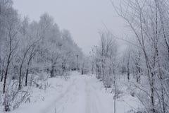 Χιονώδης χειμερινός δρόμος στο δάσος με τα δέντρα που καλύπτονται από το hoarfrost στοκ φωτογραφία με δικαίωμα ελεύθερης χρήσης
