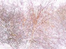 """Χιονώδης χειμώνας έξω από το παράθυρο Πουλιά στο δέντρο Πτώσεις â """"χιονιού – 2 στοκ εικόνες με δικαίωμα ελεύθερης χρήσης"""