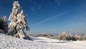 χιονώδης χειμώνας δέντρων τ Στοκ φωτογραφία με δικαίωμα ελεύθερης χρήσης