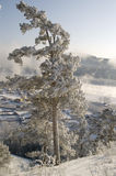 χιονώδης χειμώνας δέντρων Στοκ φωτογραφίες με δικαίωμα ελεύθερης χρήσης