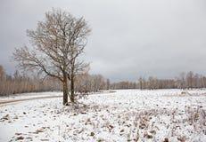 χιονώδης χειμώνας σκηνής Στοκ Εικόνες