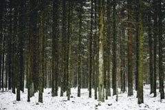 Χιονώδης χειμώνας στο δάσος η γραμμή δέντρων Στοκ Φωτογραφία