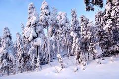 Χιονώδης χειμώνας του 2018 Στοκ εικόνα με δικαίωμα ελεύθερης χρήσης