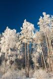 χιονώδης χειμώνας Στοκ Φωτογραφία