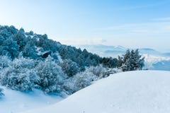 χιονώδη δέντρα βουνών στοκ εικόνες