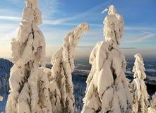 Χιονώδη δέντρα ενός χειμερινού βουνού στοκ φωτογραφία με δικαίωμα ελεύθερης χρήσης