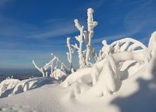Χιονώδη δέντρα ενός χειμερινού βουνού στοκ φωτογραφίες με δικαίωμα ελεύθερης χρήσης