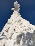 Χιονώδη δέντρα ενός χειμερινού βουνού στοκ εικόνα