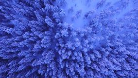 Χιονώδη δέντρα επάνω από το χειμώνα ο αργότερα απόθεμα βίντεο