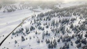 Χιονώδη δέντρα και δάση στα ελβετικά βουνά Jura απόθεμα βίντεο