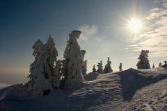 Χιονώδη δέντρα στο ηλιοβασίλεμα Στοκ Εικόνες