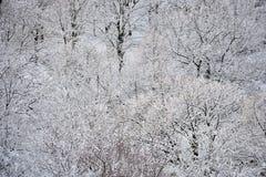 Χιονώδη δέντρα το Δεκέμβριο Στοκ εικόνα με δικαίωμα ελεύθερης χρήσης
