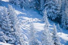χιονώδη δέντρα φραγών Στοκ Φωτογραφία