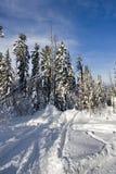 χιονώδη δέντρα Στοκ εικόνες με δικαίωμα ελεύθερης χρήσης