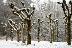 χιονώδη δέντρα Στοκ Εικόνες