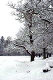 χιονώδη δέντρα Στοκ εικόνα με δικαίωμα ελεύθερης χρήσης
