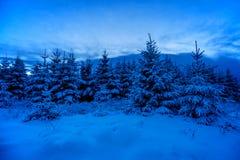 Χιονώδη ξύλα σε Winterime Στοκ Εικόνες