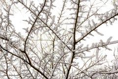 Χιονώδεις κλάδοι Στοκ φωτογραφία με δικαίωμα ελεύθερης χρήσης