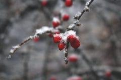 Χιονώδεις κλάδοι 2 Στοκ Εικόνες