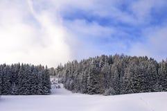 Χιονώδες δάσος πεύκων Στοκ φωτογραφία με δικαίωμα ελεύθερης χρήσης