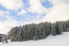 Χιονώδες δάσος πεύκων Στοκ Φωτογραφίες