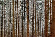 Χιονώδες δάσος Στοκ Εικόνες