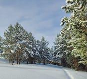Χιονώδες δάσος Στοκ εικόνα με δικαίωμα ελεύθερης χρήσης