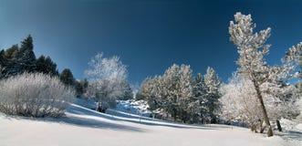 Χιονώδες δάσος, Vitosha βουνό, Βουλγαρία στοκ εικόνα