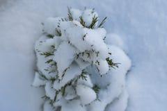 Χιονώδες δέντρο έλατου Στοκ Φωτογραφία