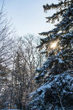 Χιονώδες δέντρο πεύκων στοκ φωτογραφία με δικαίωμα ελεύθερης χρήσης