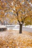 Χιονώδες δέντρο πτώσης Στοκ Εικόνα