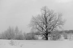 Χιονώδες δέντρο σε έναν τομέα Στοκ εικόνες με δικαίωμα ελεύθερης χρήσης