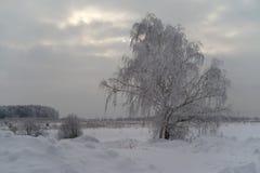 Χιονώδες δέντρο σε έναν τομέα Στοκ Φωτογραφία