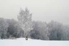 Χιονώδες δέντρο σε έναν τομέα Στοκ εικόνα με δικαίωμα ελεύθερης χρήσης