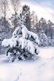 χιονώδες δέντρο Χριστουγέννων Στοκ φωτογραφίες με δικαίωμα ελεύθερης χρήσης