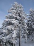 χιονώδες δέντρο Στοκ φωτογραφία με δικαίωμα ελεύθερης χρήσης